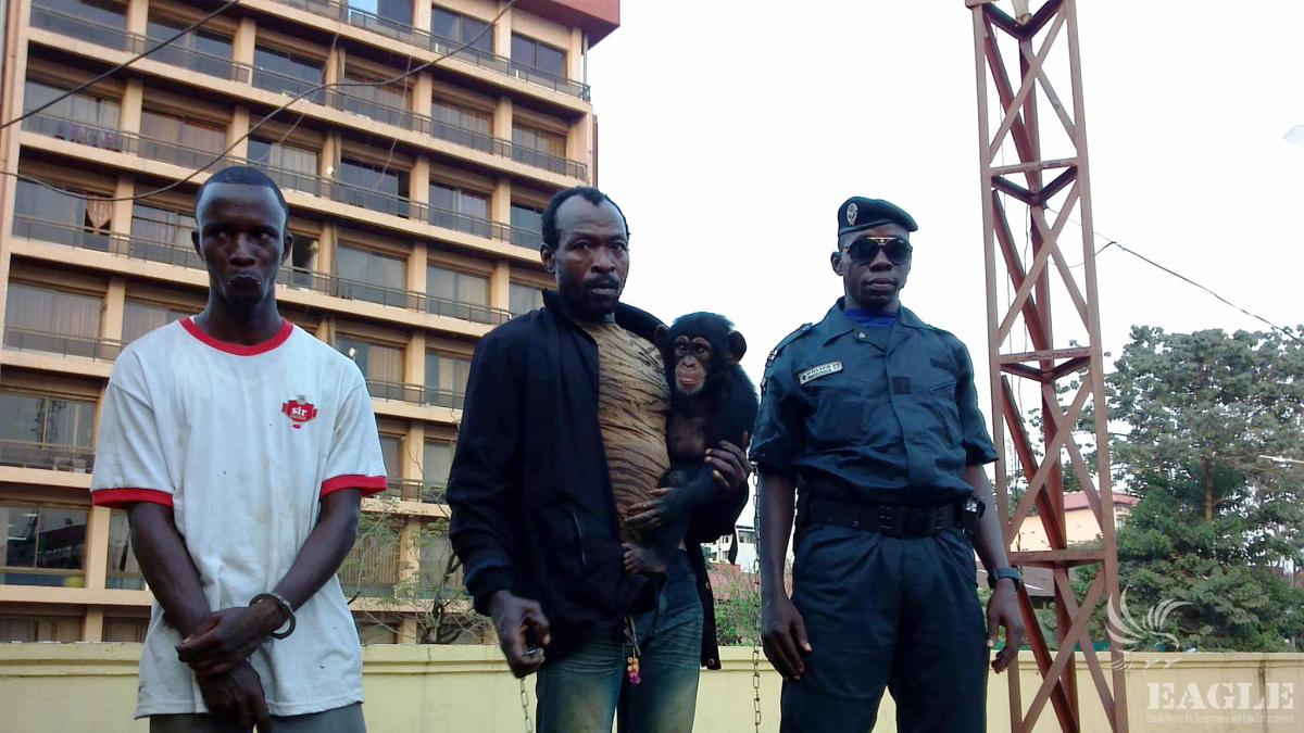 December 20, 2014: 2 traffickers arrested with one chimp in Conakry