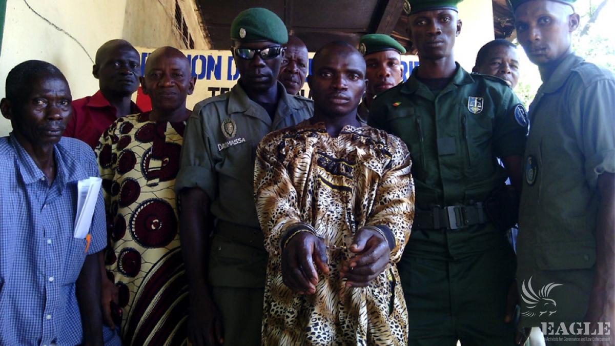 July 14, 2014: Trafficker and elephant poacher arrested and get 1 year emprisonnement, maximal sentence in Guinea