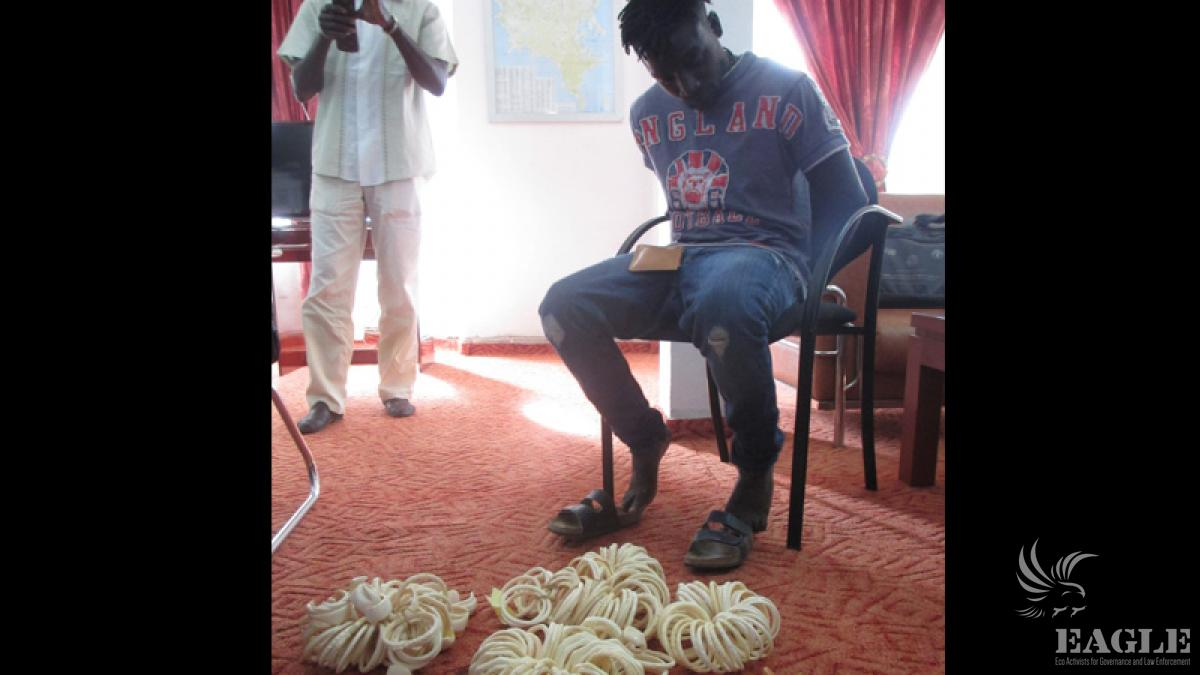 May 20, 2014: 2 international traffickers arrested in Dakar with 332 ivory items