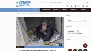 GRASP Hails Arrest of Major Guinea Ape Trafficker