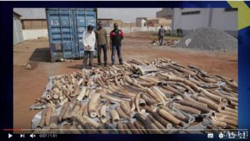 3 ivory traffickers were prosecuted to 22 and 24 months in jail.