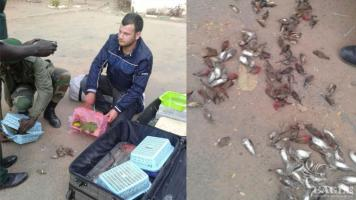 2 Spanish arrested with 500 concealed birds