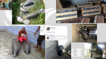 Abdoul Salam Sidibé, a major ape trafficker, arrested