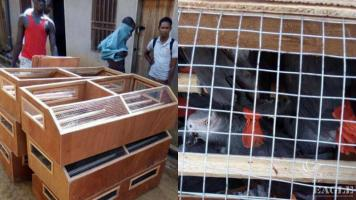2 bird traffickers arrested, 300 grey parrots rescued