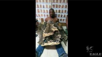 2 traffickers arrested with 2 leopard skins