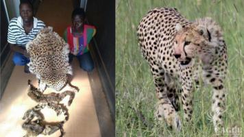 4 arrested with a cheetah skin