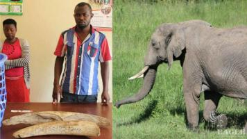 2 traffickers arrested with 12kg Ivory