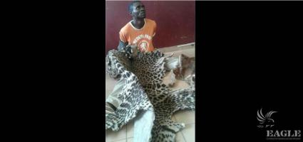 A trafficker arrested with a leopard skin