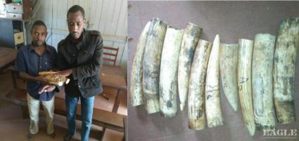 2 traffickers arrested with 20 kg of Ivory