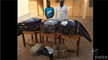 3 traffickers arrested with 783 python skins