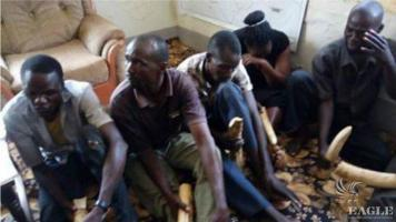 5 traffickers arrested with 6 Ivory pieces
