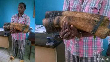 2 ivory traffickers arrested, one of them repeat offender