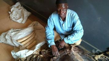 A major trafficker arrested with okapi skin and 4 Ivory pieces