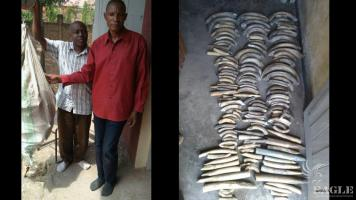 2 traffickers arrested with 140 hippo teeth