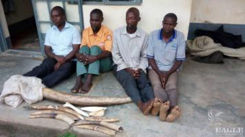 4 traffickers arrested with 58kg Ivory