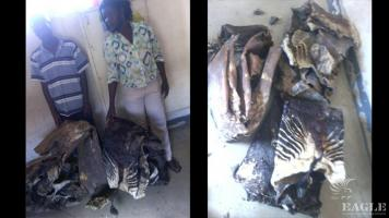 2 traffickers arrested with 3 okapi skins