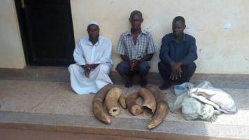 3 traffickers arrested with 45kg Ivory