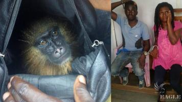 2 traffickers arrested with a baby mandrill