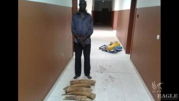 A Senegalese wildlife trafficker arrested with 4 tusks