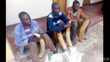 3 traffickers arrested with 47 kg of ivory