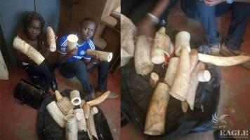 2 traffickers arrested with 47kg Ivory