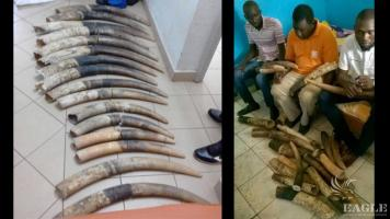 4 traffickers arrested with 16 tusks