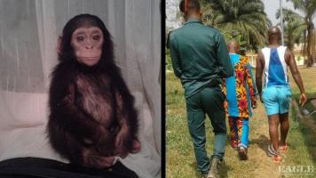 A baby chimp rescued and 3 traffickers arrested