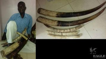 An ivory trafficker arrested with 5 tusks