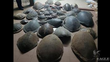 A trafficker arrested with 41 sea turtle shells and 3.5 kg of sea horses