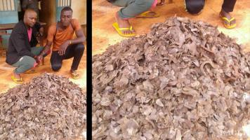 3 traffickers arrested with 35 kg pangolin scales