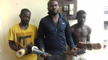 3 traffickers arrested with 6 pieces of ivory