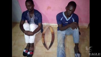 3 ivory traffickers arrested with two tusks