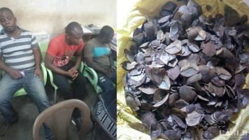 4 traffickers including a corrupt policeman arrested with 270kg of pangolin scales