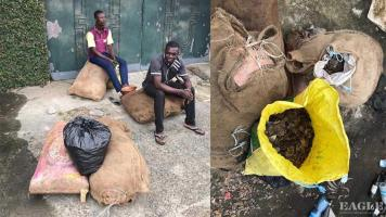 A trafficker arrested with more than 150 kg of pangolin scales