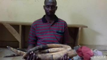A Cameroonian trafficker arrested with 4 tusks