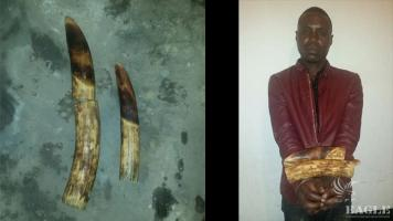 A corrupt military man arrested with 2 ivory tusks