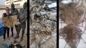 3 traffickers arrested with more than 500 wildlife skins