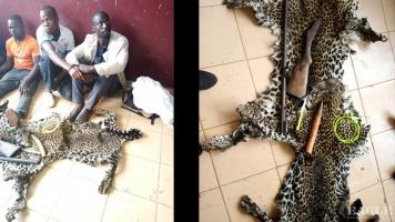 3 traffickers arrested with 2 leopard skins