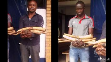3 traffickers arrested with 9 tusks