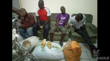 4 traffickers arrested with  pangolin scales