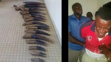 7 traffickers arrested with 37 tusks