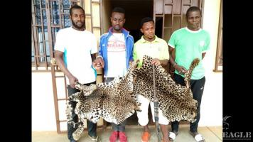 4 traffickers arrested with two leopard skins