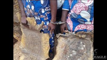 2 traffickers arrested with a leopard skin and 3 crocodile skins