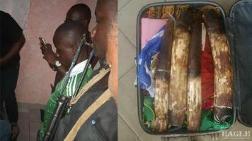A trafficker arrested with 4 elephant tusks