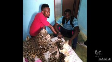 2 traffickers arrested with two leopard skin