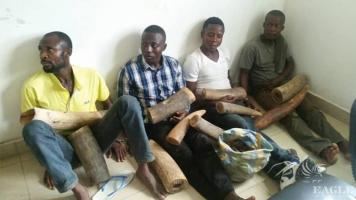 7 traffickers arrested with 50 kg ivory
