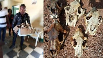 A corrupt police officer arrested with 5 lion skulls