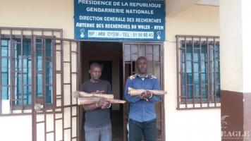 3 ivory traffickers arrested with 2 tusks