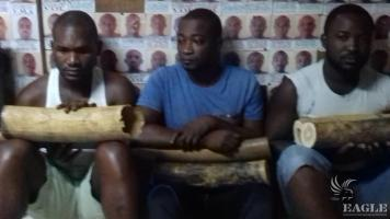 A prison security officer arrested with 2 traffickers, two tusks seized