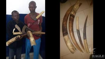 2 arrested  with 20 kg ivory